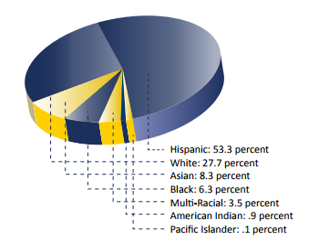Pie chart demographics